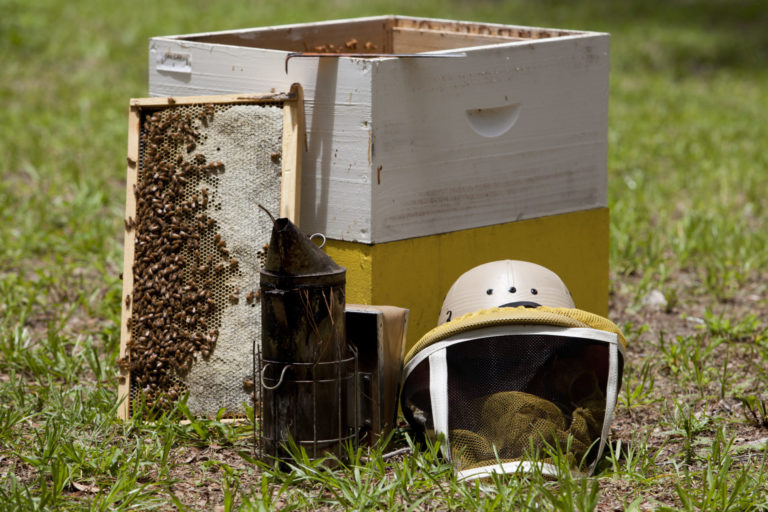Bee hive and honey beekeeping equipment